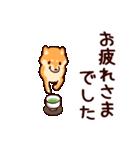 わんわん柴犬2(個別スタンプ:12)