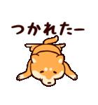 わんわん柴犬2(個別スタンプ:14)