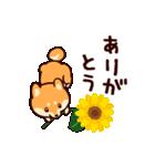 わんわん柴犬2(個別スタンプ:36)