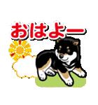 わんこ日和 黒柴9(個別スタンプ:01)