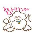(犬)うるわしのプードル(個別スタンプ:27)