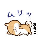 柴犬 まちこ(個別スタンプ:15)
