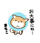 柴犬 まちこ(個別スタンプ:22)
