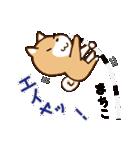 柴犬 まちこ(個別スタンプ:36)