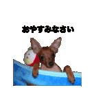 日常会話ミニピン⑨【丁寧語ver.】(個別スタンプ:04)