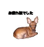 日常会話ミニピン⑨【丁寧語ver.】(個別スタンプ:09)