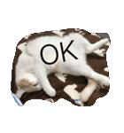 猫にカンパ〜イ!!!(個別スタンプ:02)