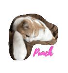 猫にカンパ〜イ!!!(個別スタンプ:05)