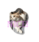 猫にカンパ〜イ!!!(個別スタンプ:07)
