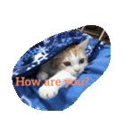 猫にカンパ〜イ!!!(個別スタンプ:13)