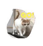 猫にカンパ〜イ!!!(個別スタンプ:14)