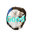 猫にカンパ〜イ!!!(個別スタンプ:15)
