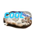 猫にカンパ〜イ!!!(個別スタンプ:16)