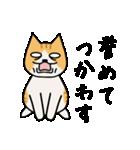 ブサイクなねこ(上から目線)(個別スタンプ:08)
