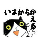 はちわれ靴下猫★日常会話★(個別スタンプ:17)