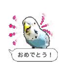 セキセイ インコのPちゃん、鳥の吹き出し。(個別スタンプ:01)