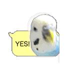 セキセイ インコのPちゃん、鳥の吹き出し。(個別スタンプ:02)