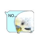 セキセイ インコのPちゃん、鳥の吹き出し。(個別スタンプ:03)