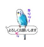 セキセイ インコのPちゃん、鳥の吹き出し。(個別スタンプ:04)
