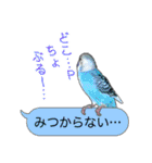 セキセイ インコのPちゃん、鳥の吹き出し。(個別スタンプ:08)