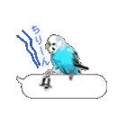 セキセイ インコのPちゃん、鳥の吹き出し。(個別スタンプ:09)