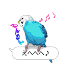 セキセイ インコのPちゃん、鳥の吹き出し。(個別スタンプ:13)