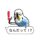 セキセイ インコのPちゃん、鳥の吹き出し。(個別スタンプ:14)