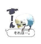 セキセイ インコのPちゃん、鳥の吹き出し。(個別スタンプ:16)