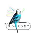 セキセイ インコのPちゃん、鳥の吹き出し。(個別スタンプ:19)