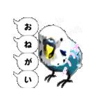 セキセイ インコのPちゃん、鳥の吹き出し。(個別スタンプ:21)