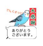 セキセイ インコのPちゃん、鳥の吹き出し。(個別スタンプ:24)