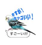 セキセイ インコのPちゃん、鳥の吹き出し。(個別スタンプ:29)