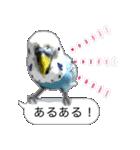 セキセイ インコのPちゃん、鳥の吹き出し。(個別スタンプ:30)