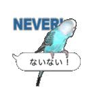 セキセイ インコのPちゃん、鳥の吹き出し。(個別スタンプ:31)