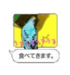 セキセイ インコのPちゃん、鳥の吹き出し。(個別スタンプ:35)