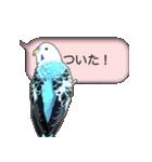 セキセイ インコのPちゃん、鳥の吹き出し。(個別スタンプ:37)