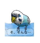 セキセイ インコのPちゃん、鳥の吹き出し。(個別スタンプ:38)