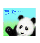 パンダ、大好き。(個別スタンプ:27)