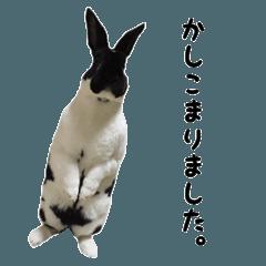 ミニレッキス〜日常使い〜