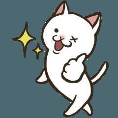 白猫ここすけ