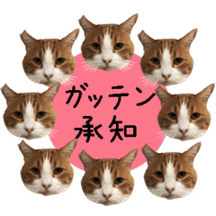 ざ・にゃんこスタンプ3