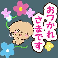 トイプードル【アプリコット(敬語編)】