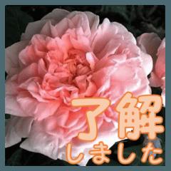 薔薇の花♡ME_挨拶メッセージ
