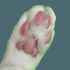 リアル猫のくるみとみるく3