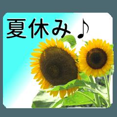 暮らしに花を♪ひまわり