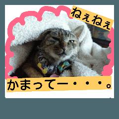 【ぼく、猫だよ!】スタンプ