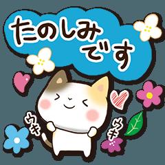 花と三毛猫