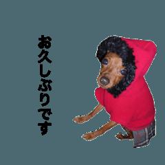 日常会話ミニピン⑨【丁寧語ver.】