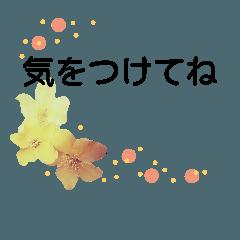 美しい花達  2