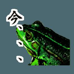 わたしは蛙。